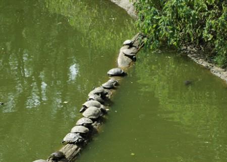roodwangschildpad zoo olmen