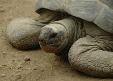 schildpad paradisio klein