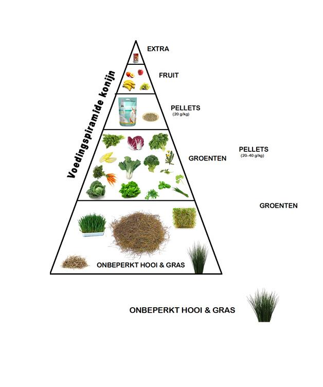 voedselpiramide
